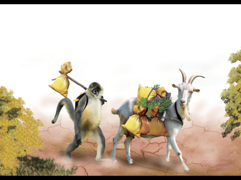 monkey's journey