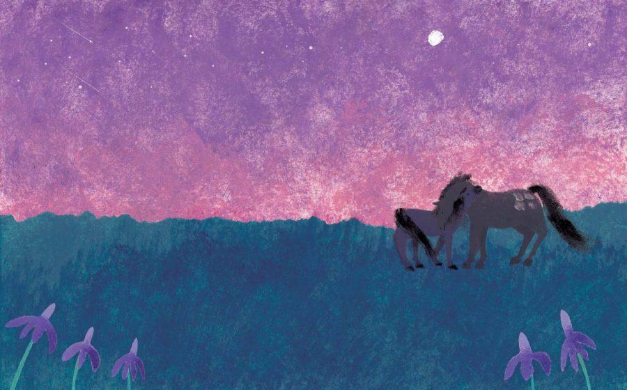 Prairie Under the Stars
