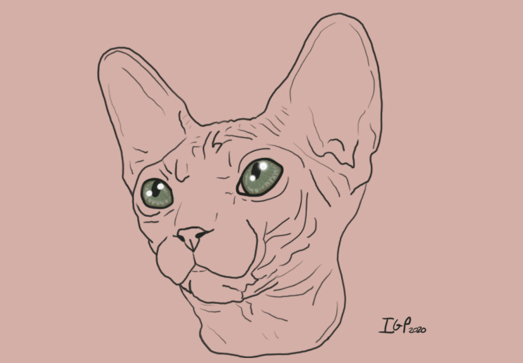 sphynx_cat-final