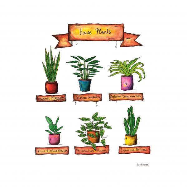'House Plants'