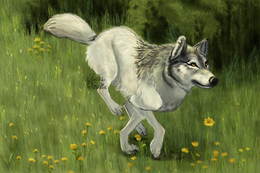 Wolf_Run_041020
