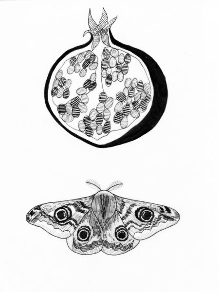Pomegranate and Emperor Moth Illustrations (1)