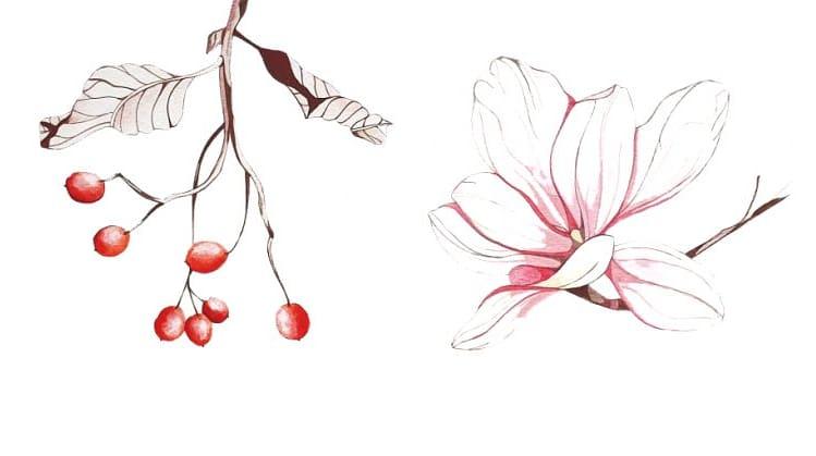 Berries & Magnolia