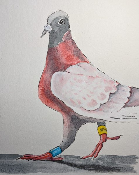 thepinkpigeon
