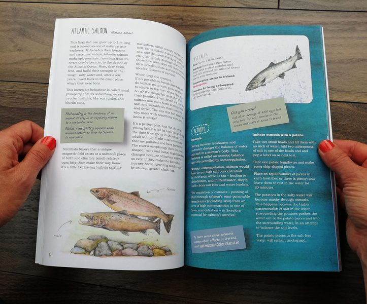 'Remarkable Creatures: a guide to some of Ireland's disappearing animals' book