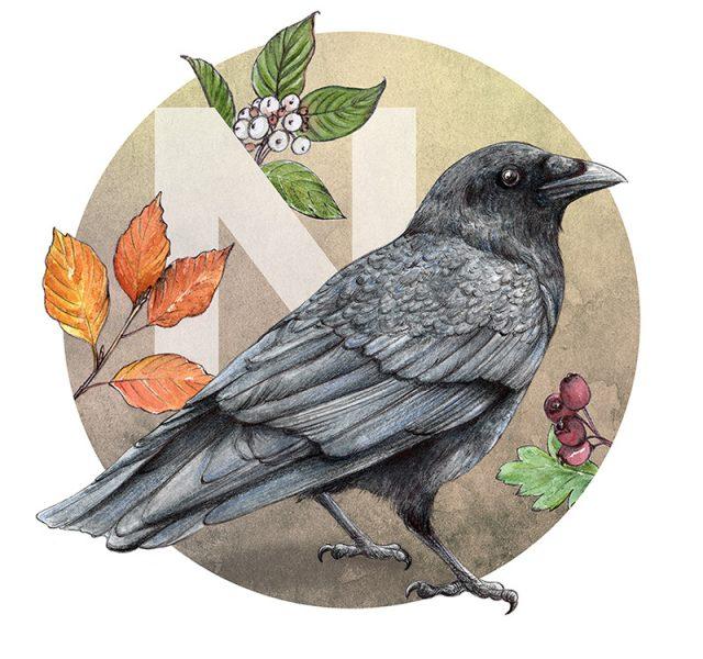 Crow-illustration by Aga Grandowicz