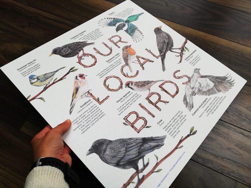 Our local birds – illustrated information board by Aga Grandowicz.