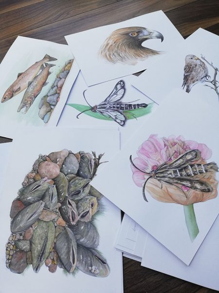 illustrations for 'Remarkable Creatures: a guide to some of Ireland's disappearing animals' book