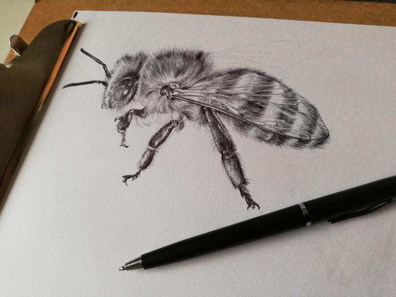Honeybee realistic drawing by Aga Grandowicz.