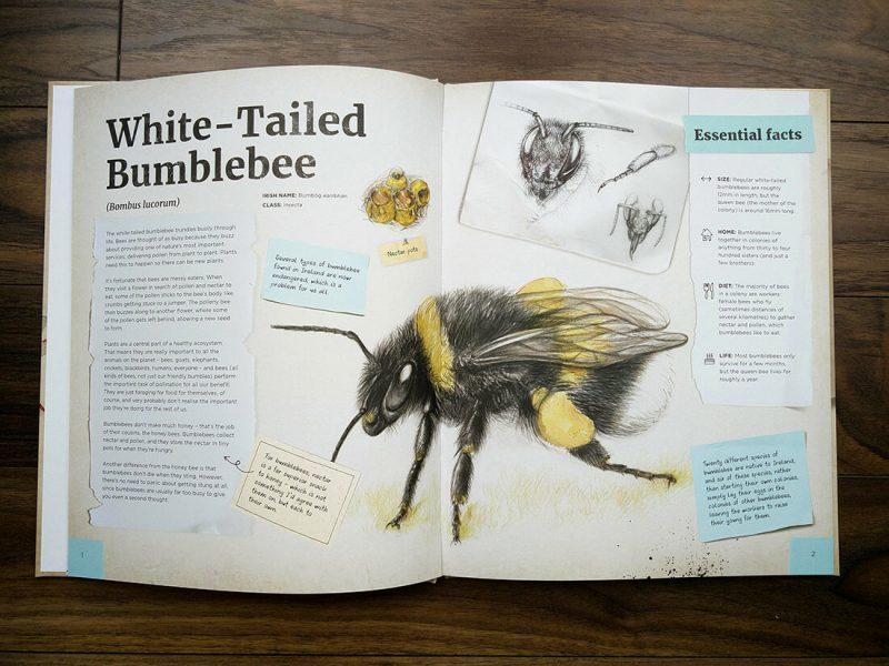 Dr Hibernica Finch's Compelling Compendium of Irish Animals – bumblebee spread.