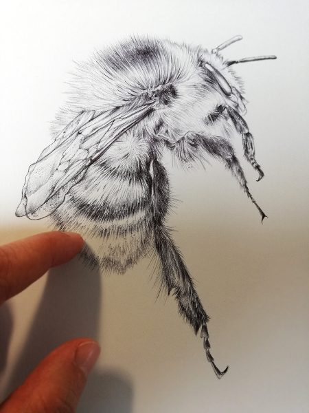 Bumblebee realistic drawing by Aga Grandowicz.