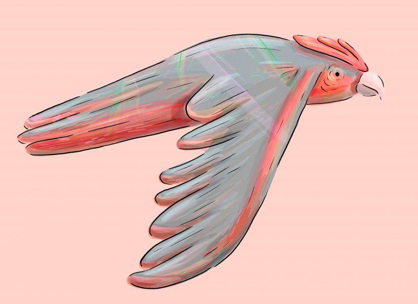 Flying Galah