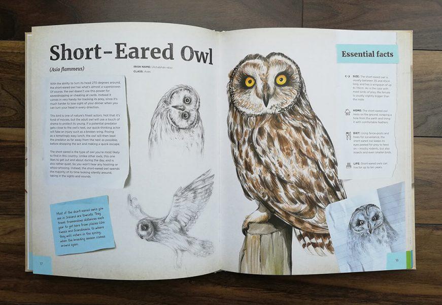 Dr Hibernica Finch's Compelling Compendium of Irish Animals – short-eared owl spread.