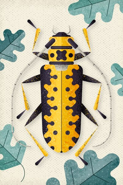 Longhornbeetle, Poster illustration