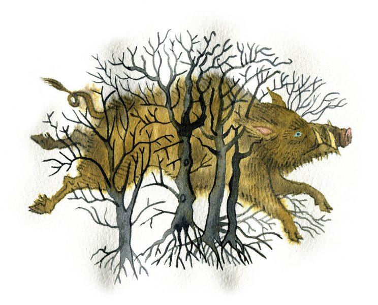 Enchanted-boar