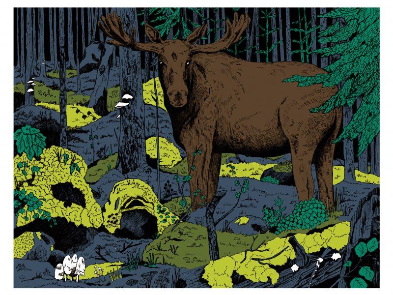 Lone Moose Digital Illustration