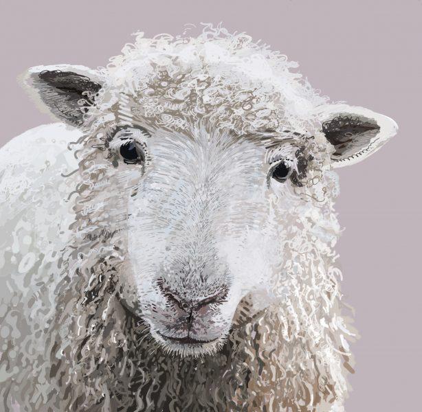 sheep 11