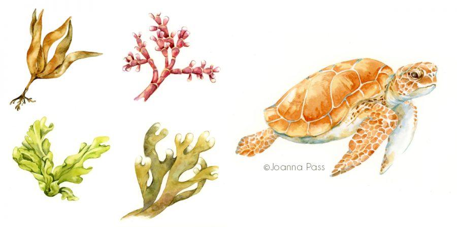 Seaweeds and turtle