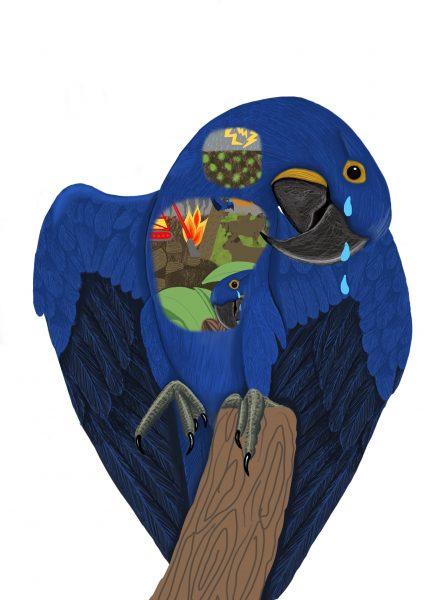 Hyacinth Macaw Threats