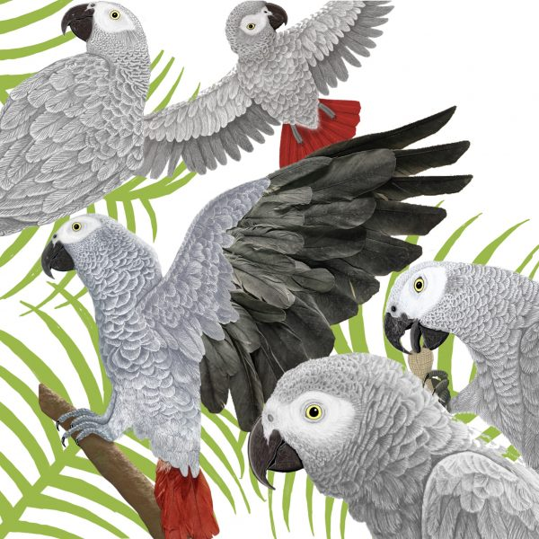 African grey parrot drawing/ feather collage