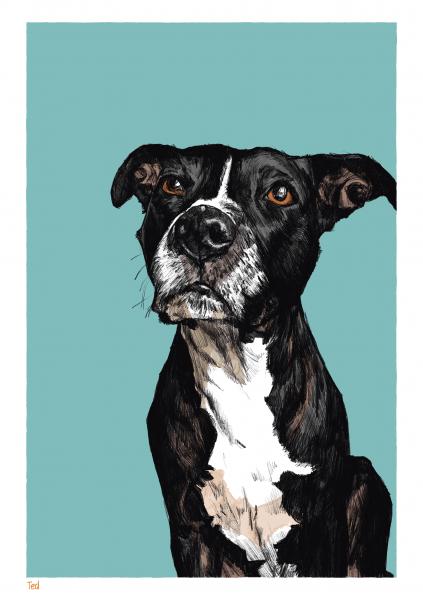 Ted Pet Portrait
