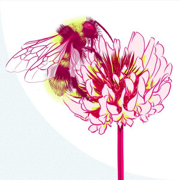 Bee Taking Pollen from a Clover Flower