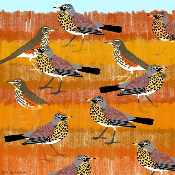 Fieldfares & Redwings