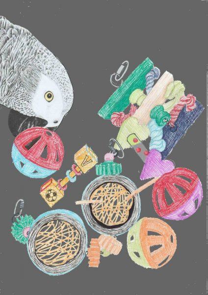 African grey parrot & his toys