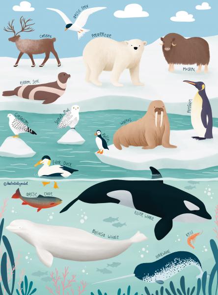 Arctic animals jigsaw