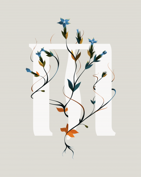 Typography Floral Poster Gentiana Nivalis Illustration