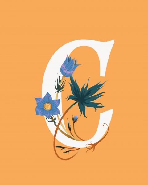Typography Floral Poster Pulsatilla patens Illustration