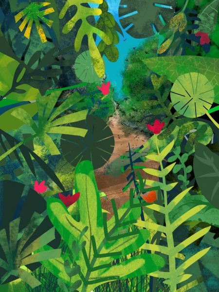 The Little Rainforest