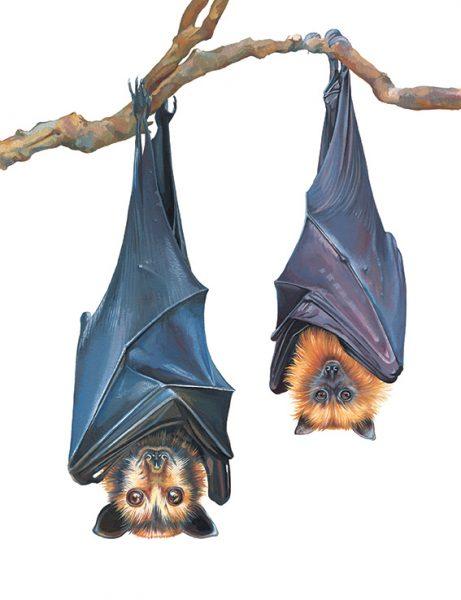 Libbi_King_Bats_web