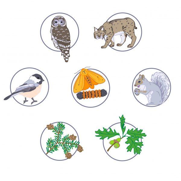 Food Web Icons
