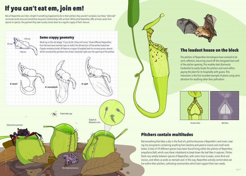 Nepenthes Infographic