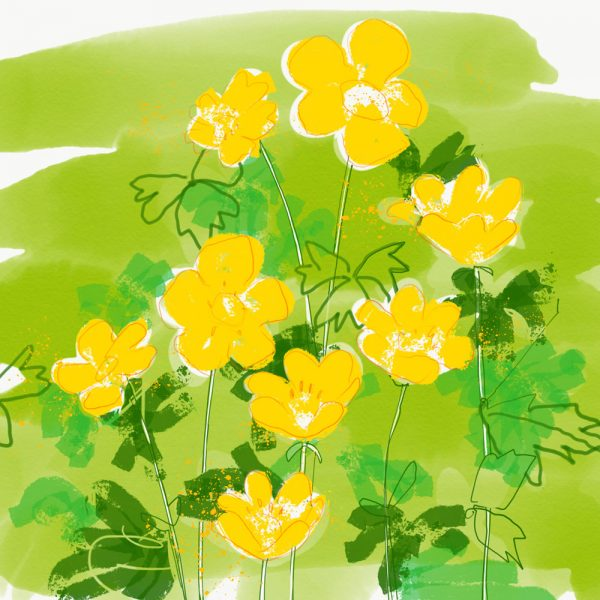 AliceS-Buttercups