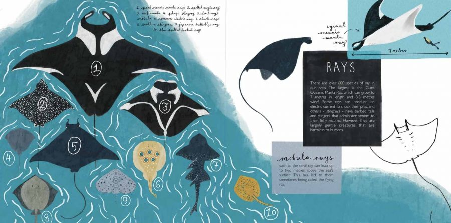Ocean Rays Illustration