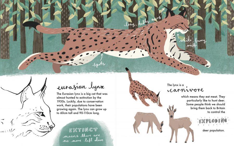 Eurasian Lynx Illustration
