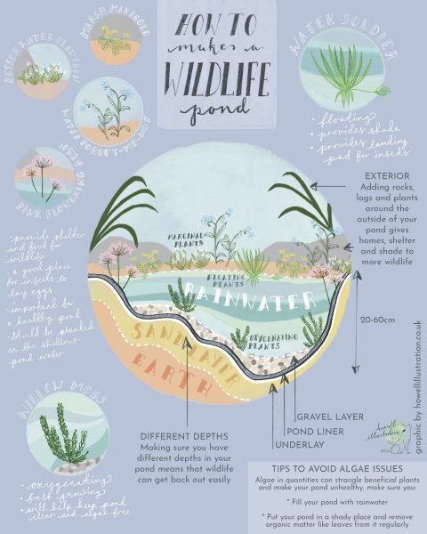How to Make A Wildlife Pond