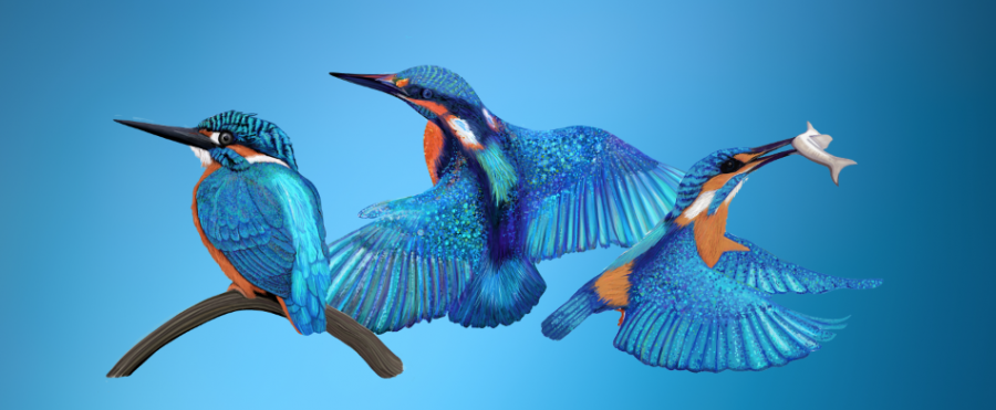 Collection of Kingfishers