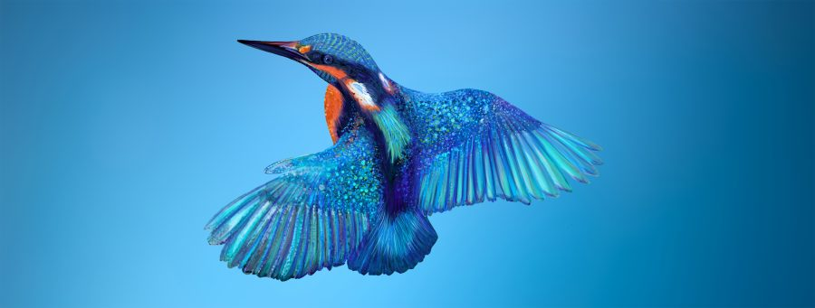 kingfisher on blue