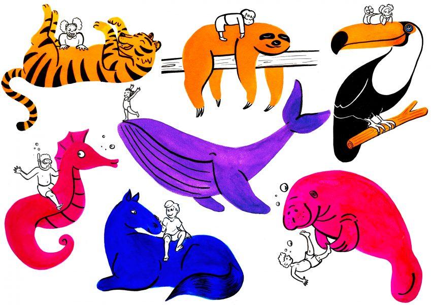 colour animals 2