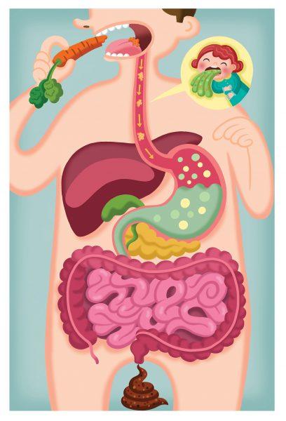 Food - Digestive System