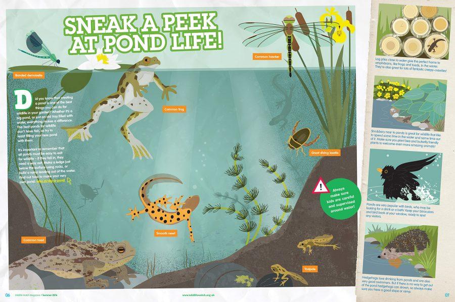 Interior spread, Wildlife Watch Magazine