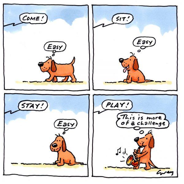 Dog Gray Jolliffe