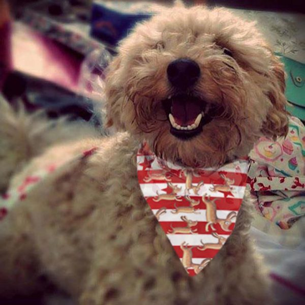Happy Dog bandana design