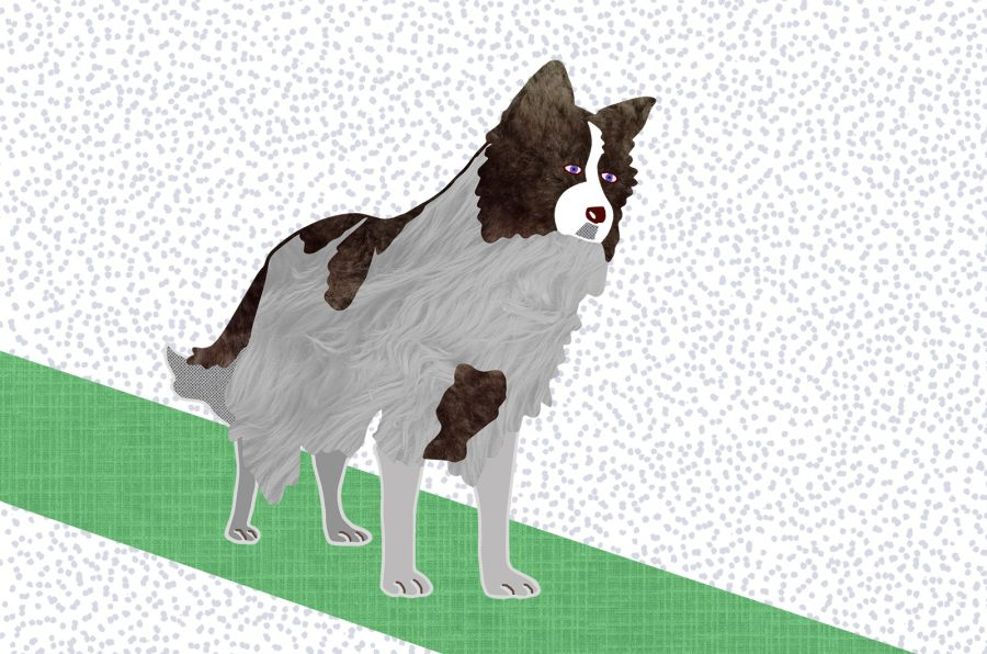 Le Corbusier (Tadoa Ando's dog)