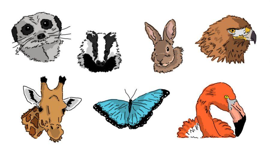 Animal icons2
