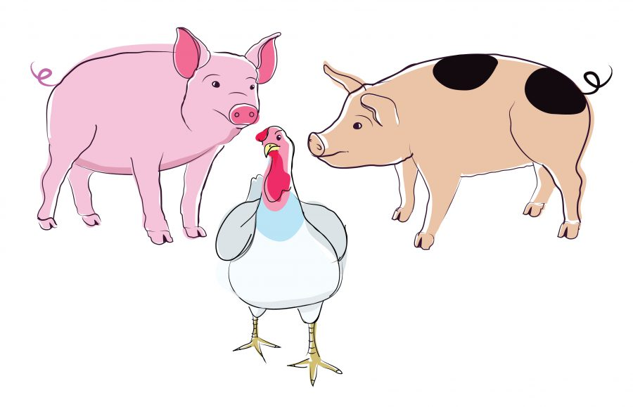 Animal Illustrations for the RSPCA, Freedom Food