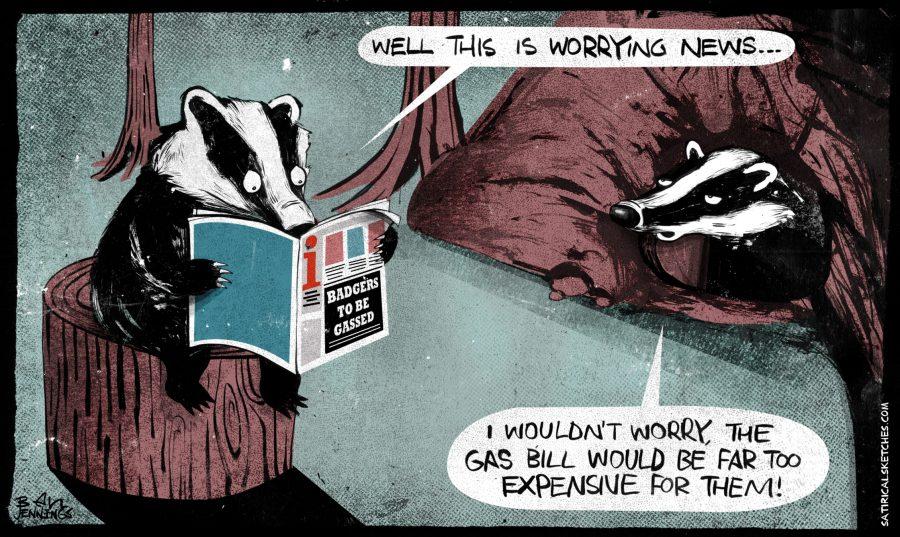 Badger Cull Newspaper Cartoon